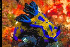 Los 10 animales marinos más coloridos del mundo, ¡hermosos!