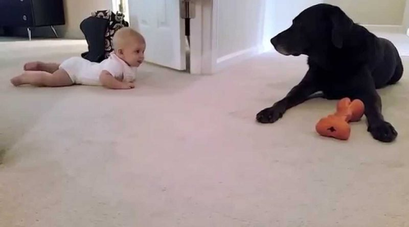 Babys-first-crawl-with-her-dog...-what-a-cute-ending