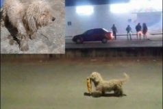 De ladrón a héroe del 'gasolinazo' en México: premian a Max, el perro saqueador. ¡Qué ternura!