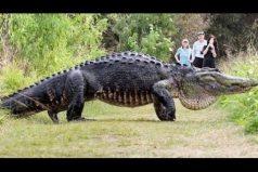 ¿Volvieron los dinosaurios? Turistas graban a este enorme cocodrilo en Florida. ¿Será real?