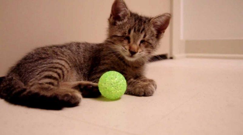 El-gatito-ciego-que-recibió-una-oportunidad-de-vida