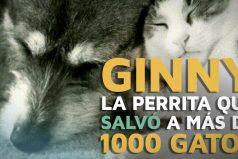 Ginny, la perrita que salvó a más de 1000 gatos, ¡like por ella!