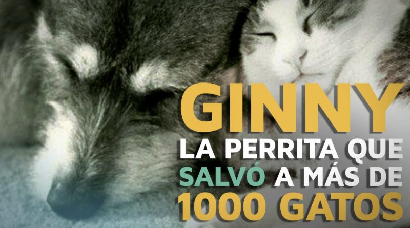 Ginny-la-perrita-que-salvó-a-más-de-1000-gatos