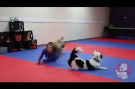 ¿Cómo entrenar a tu perro y divertirte en el intento? ¡Vas a querer probarlo de inmediato!