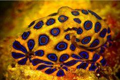 Espectacular ranking de animales peligrosos. ¿Sabes cuál especie de Colombia está en la lista?