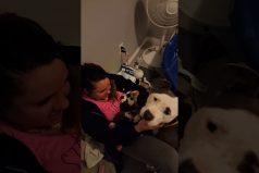 Una pitbull comparte sus cachorros con la mujer que la rescató cuando estaba embarazada. ¡Qué gesto tan conmovedor!