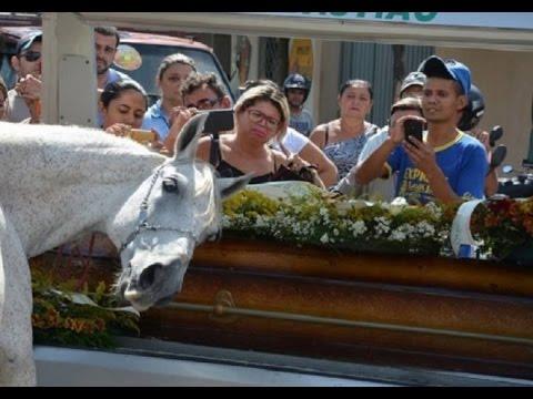 Sereno-el-caballo-que-llora-a-su-dueño-en-el-funeral-😢