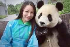 El oso panda que es famoso por sus poses para las fotos, ¡todo un modelo!