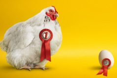 Las gallinas saben contar y tienen conciencia de sí mismas, ¡que lindas!