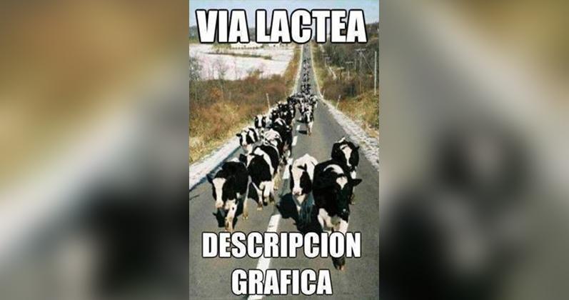 Vacas en una vía