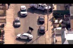 ¡San Fermín en Nueva York! Este toro causó revuelo en Queens durante más de una hora. ¡Qué susto!