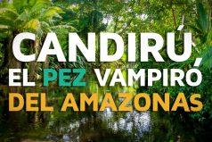 Conoce todo sobre el Candirú, ¡que hermosa es la naturaleza!