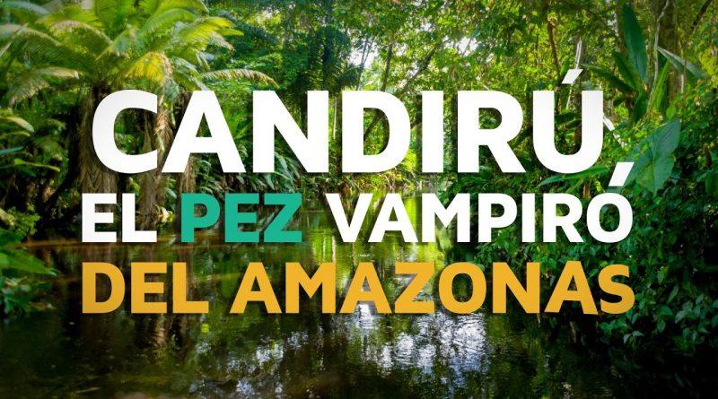 Candirú-el-pez-VAMPIRO-del-Amazonas