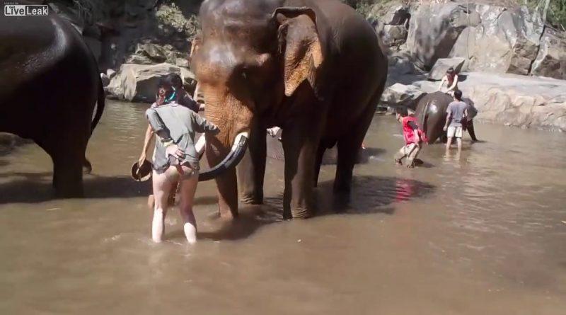 Never-piss-off-an-elephant