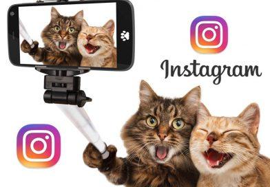 En Instagram ya puedes crear álbumes de fotos y videos