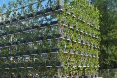 Edificios vivientes, lo nuevo en arquitectura sustentable