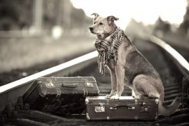 La tierna historia de Ángel, un perro que esperó a su amo por seis años en un andén