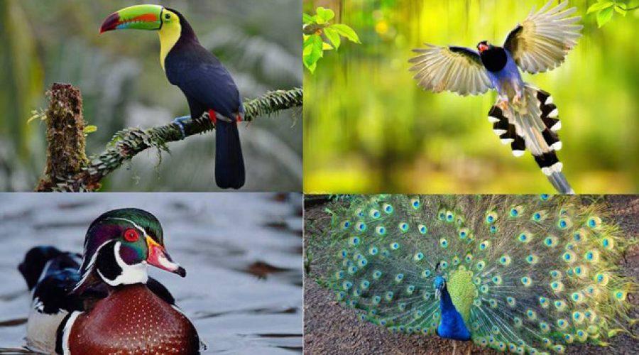Las 8 aves más hermosas del mundo, quedarás sorprendido con su belleza