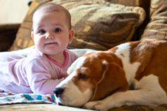 8 cosas que tu hijo debe saber antes de tener una mascota