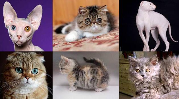 gatosportada