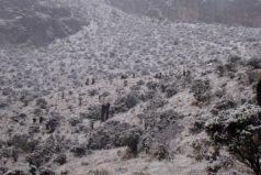 Después de 10 años, volvió a caer nieve en el Parque los Nevados