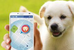 El dispositivo que le permitirá rastrear la ubicación de tu mascota llegó a Colombia