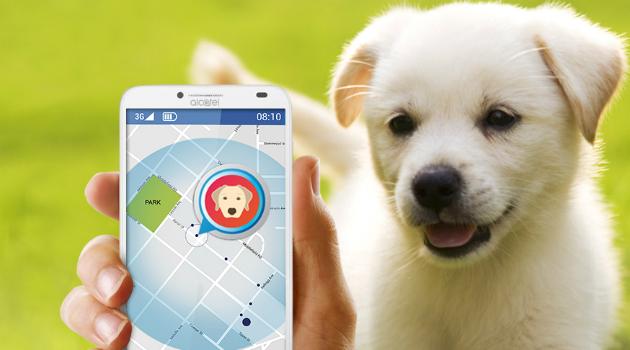 El dispositivo que le permitirá rastrear la ubicación de su mascota llegó a Colombia