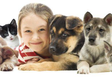 Animales que no tengan un hogar y que estén en emergencia serán atendidos gratuitamente. ¡Esta noticia nos hace muy feliz!