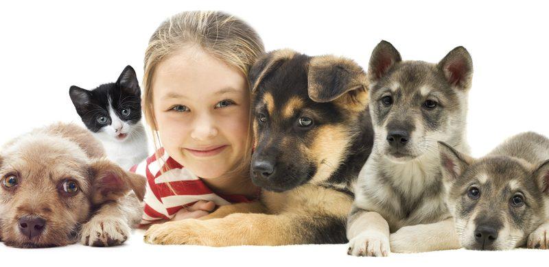 Animales que no tengan un hogar y que estén en emergencia serán atendidos gratuitamente