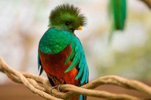 quetzal1