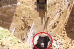 ¡Qué oso tan grande! No creerás lo que les pasó a estos trabajadores durante una excavación