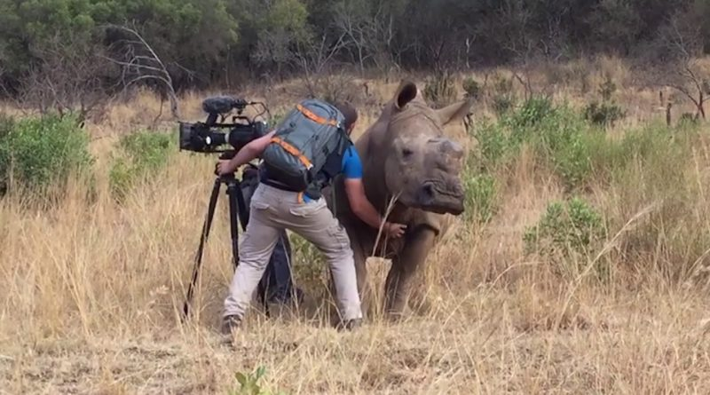 Filming-Up-Close-And-Personal-With-A-Rhino
