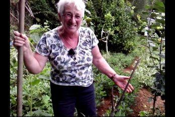 ¡Pilladas! El video de las abuelas gallegas y la marihuana. ¡Para morirse de la risa!