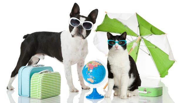 Perros y gatos ahora podrán viajar en la cabina del avión. ¿Estás de acuerdo?