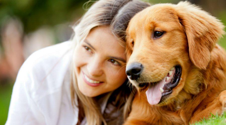 Perros y gatos tendrán su propia 'cédula'. Ojo a lo que debes hacer