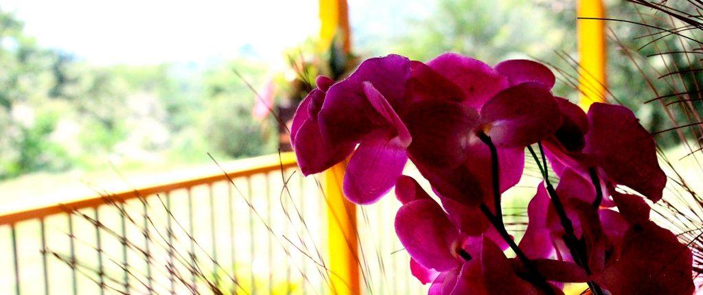 jardin_botanico_5