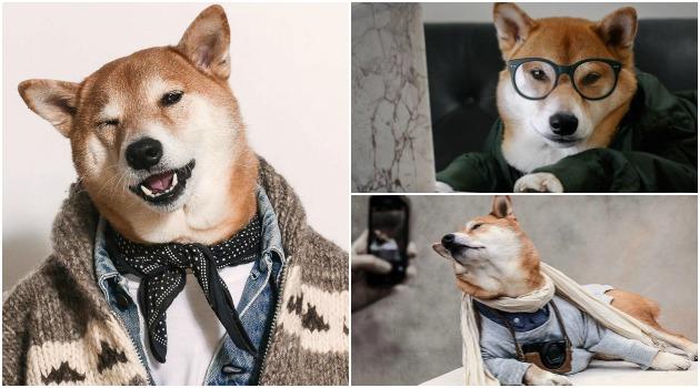 Bodhi, el perro que trabaja como modelo en Nueva York