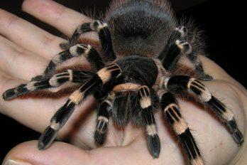 Si te asustan las arañas esta noticia te va a dejar aterrado