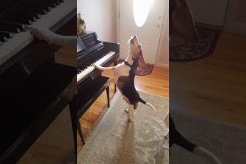 ¡Sin palabras! El nostálgico y hermoso soneto en piano… ¡Tocado por un perro!