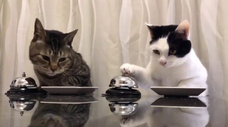 Cats-ring-a-bell-and-ask-for-food