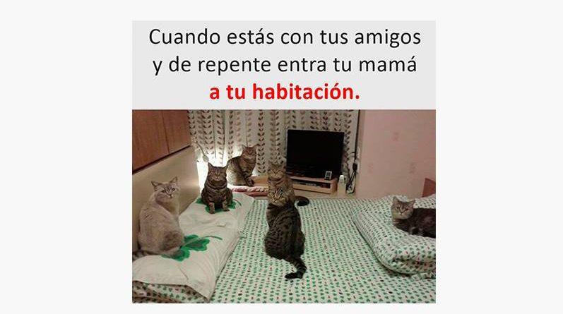 Gatos en la cama
