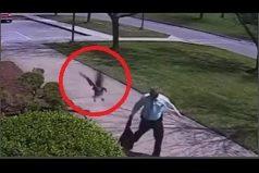 ¡Inaudito! Un ganso ataca a un policía en Estados Unidos. ¿Quién crees que huye despavorido?