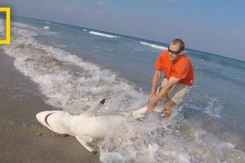 ¿Por qué este hombre se atrevió a sacar un tiburón del mar? Te conmoverá la razón. ¡Qué valiente!