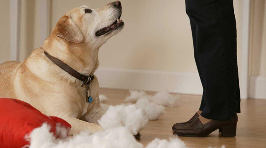 Ten en cuenta estas recomendaciones si dejas a tus mascotas solas en casa