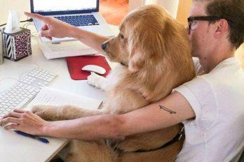 ¿Te gustaría llevar tu mascota al trabajo? una practica con beneficios