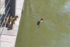 ¡Patos al agua! La nueva aventura del reino animal la protagonizan estos patitos y su manera de saltar a un estanque
