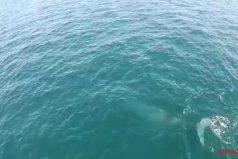 ¡Qué hermoso espectáculo! Te enamorará la escena de una ballena jorobada… ¡Creando un arco iris!