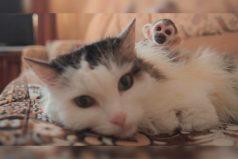 La historia de la gata que decidió adoptar un mico, ¡que lindos son los animales!
