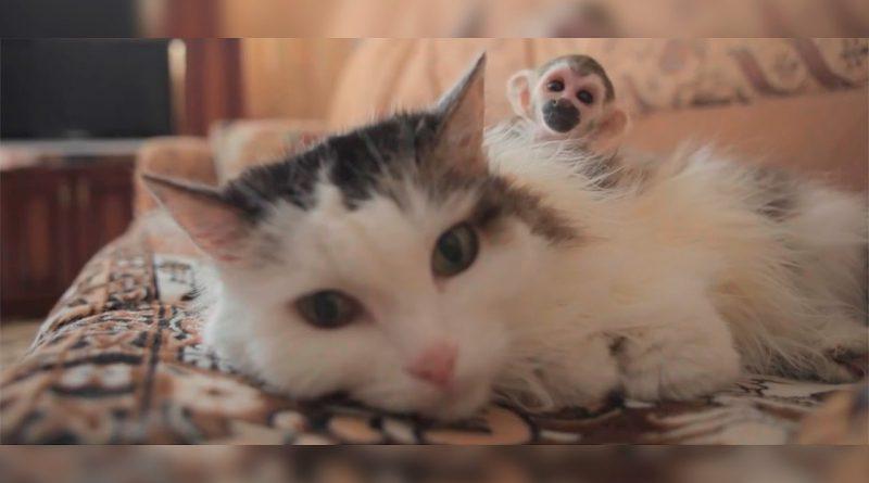 La-historia-de-la-gata-que-decidió-adoptar-un-mico-¡que-lindos-son-los-animales