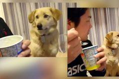 La historia del perro más orgulloso del mundo, ¡es muy hermoso!